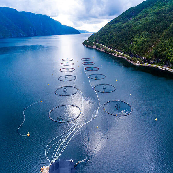 aquaculture-seafood-features-pic