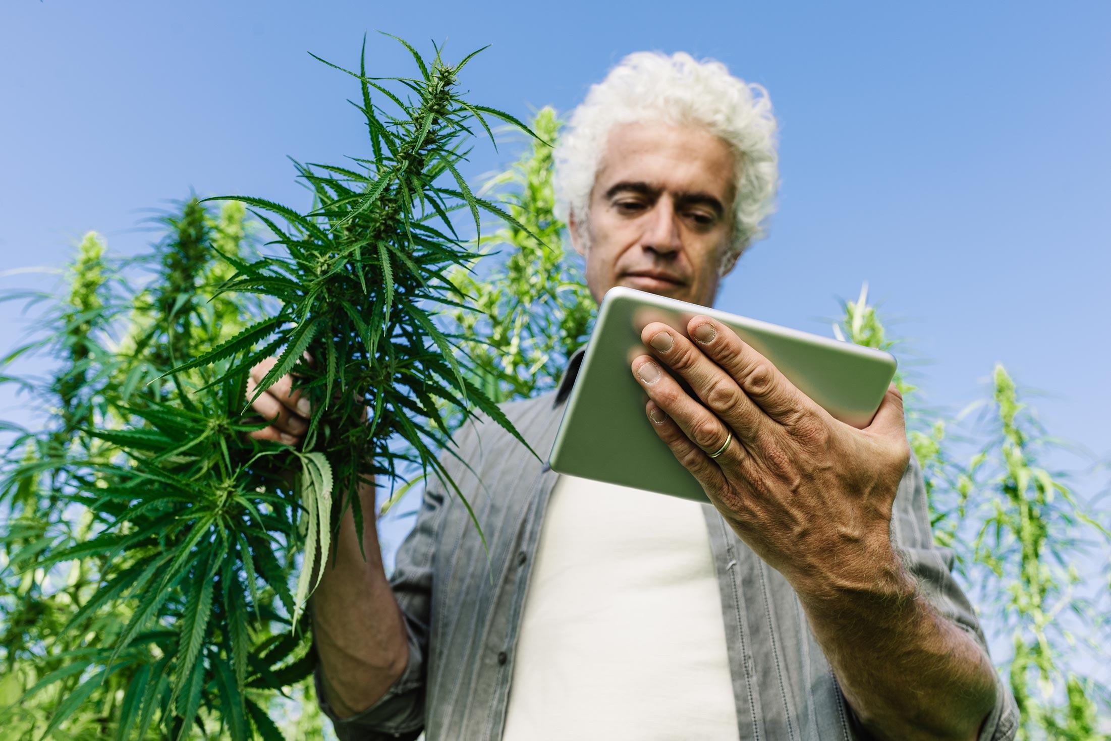 enterprise-resource-software-cannabis-2200