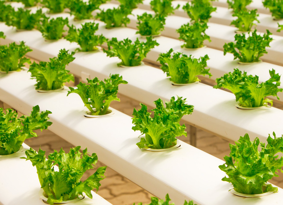SIP-Produce-Grower-field-greenhouse-v1